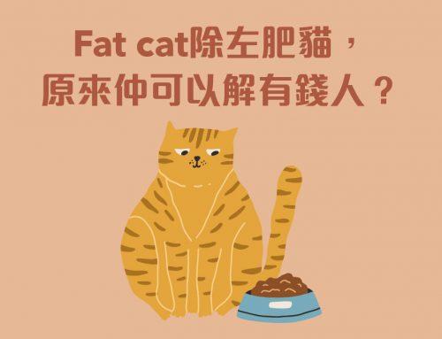 同貓有關的7個idioms
