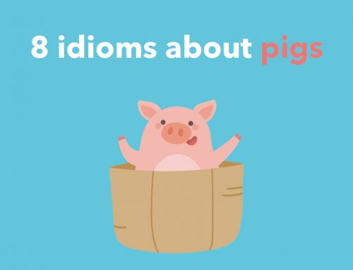 8 idioms about pigs